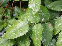Fronleichnam 11.06.20 4 Blätter